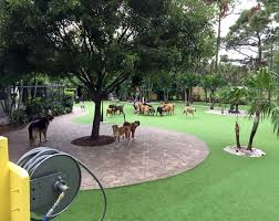 valley syn turf pet grass