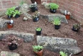 create an alpine rockery amateur gardening