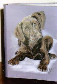 dog photo albums photo albums journals animal artistry