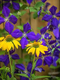 Our Favorite Plants How To by The 25 Best What Flowers To Plant Together Ideas On Pinterest
