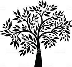 olive tree stock vector art 165812935 istock