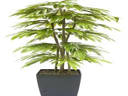 low light plants for office indoor house plants low light office best houseplants indirect