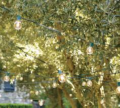 olive trees and carnival lights outdoor spaces garden