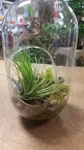 the air plant terrarium