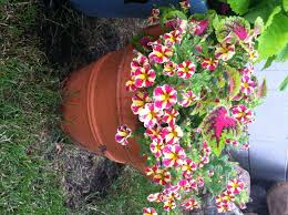 new plants for 2016 first impressions u2013 my northern garden