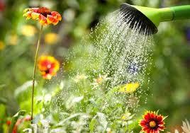 watering vegetable garden gardensdecor com