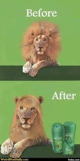 Salon Meme - lion hair salon meme generator captionator caption generator frabz