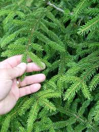 spruce garden housecalls