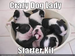 Crazy Dog Lady Meme - crazy dog lady starter kit cheezburger funny memes funny pictures