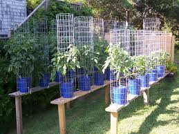 the greene tomato outdoor ebb and flow hydroponic heirloom