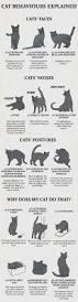 chart average cat weight chart