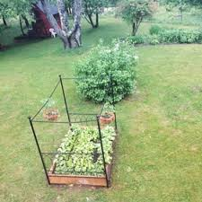 the garden bed growing veggies in a bed frame mitcharachia