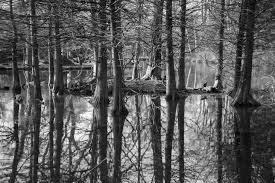 free stock photo of black and white branches forest