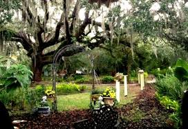 majestic tree picture of lavender n lace tea room lake alfred
