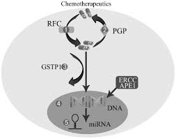 molecular mechanisms of chemoresistance in osteosarcoma review