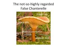 Are Backyard Mushrooms Poisonous Twelve Nh Mushrooms