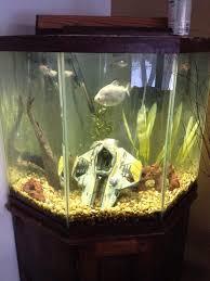 204 best inspiration 10 images on aquarium ideas fish