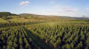 wicklow way christmas trees 2014 drone video youtube