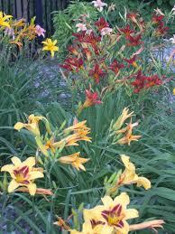 Summer Flower Garden Ideas - 33 best daylilies images on pinterest flower gardening day