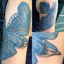 best tattoos bluejay tattoo images on designspiration