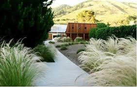 removing ornamental grasses