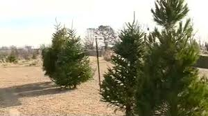 unusually warm weekend helped one tree lot sell out of