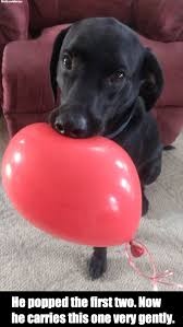 Balloon Memes - dog carries balloon gently weknowmemes