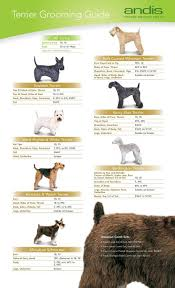 yorkie hair cut chart 73 best grooming love images on pinterest poodles dog