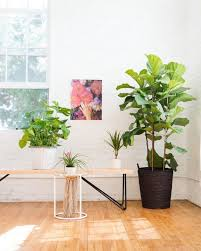Desk Plant 28 Best Plants In Offices U0026 Businesses Images On Pinterest