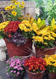 fill large container mums fall color garden club