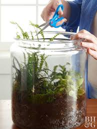 creative terrariums your how to guide to succulents and moss