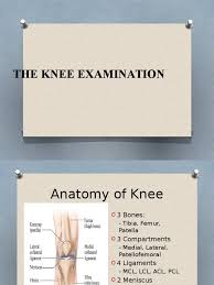 Knee Compartments Anatomy Knee Examination Knee Dance Science