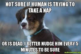 Annoyed Dog Meme - he can be annoying at times but i love the little fella meme guy