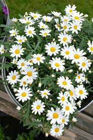 201 best flowers images on pinterest flowers daisies and
