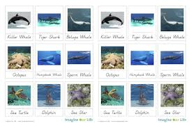 animals of the ocean for the montessori wall map u0026 quietbook with