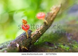 Deep Forest Green Snail Climbing Green Leaf Stock Photos Royalty Free Images