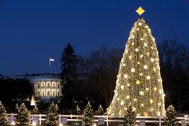 file white house and the national tree in washington