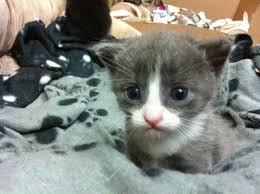 Cute Kittens Meme - cute kittens and puppies memes kitten puppy meme litle pups
