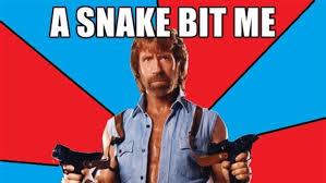 Memes Chuck Norris - a snake bit me chuck norris facts know your meme