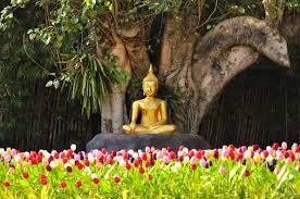 Buddhist Home Decor Buddha Under Bodhi Tree Buddha Wallpaper Design