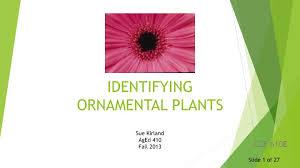 ppt identifying ornamental plants powerpoint presentation id