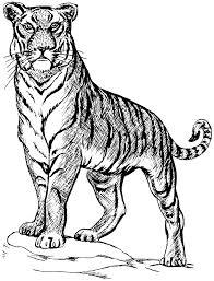 tiger sketch animals wild cats tiger tiger 2 tiger sketch png html