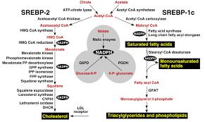 lipid metabolism leaders in pharmaceutical business intelligence