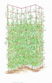 91 best trellises and tuteurs images on pinterest garden trellis