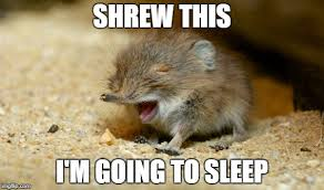 Animal Pun Meme - shrew this imgflip