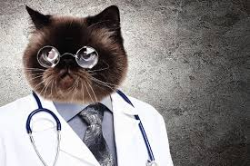 Cat Suit Meme - grumpy cat could save lives with x ray recognition