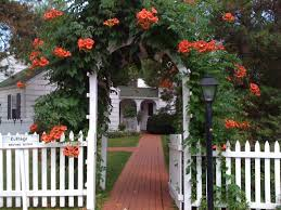 classic picket fence gate with trumpet vine style pinterest