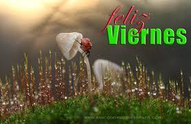 imagenes feliz viernes facebook imagenes para compartir en facebook feliz viernes bellas imagenes