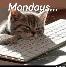 Monday Cat Meme - my monday through cat meme s a story dream