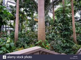 Us Botanical Gardens Dc Greenhouse Interior Us Botanic Garden Washington Dc Usa Stock
